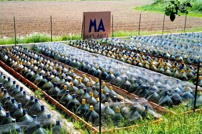 Gąsiory z winem w Mas Amiel
